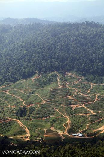 Deforestation for oil palm -- sabah_1255