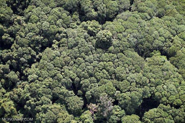Borneo rainforest -- sabah_1263