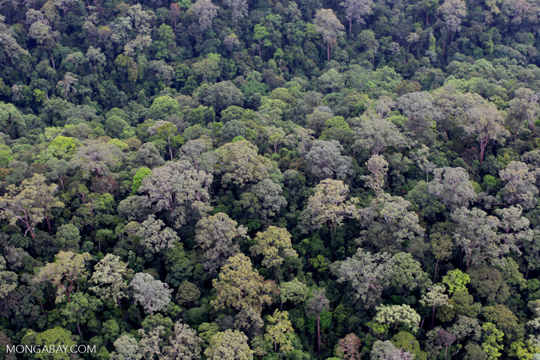 Untouched rainforest