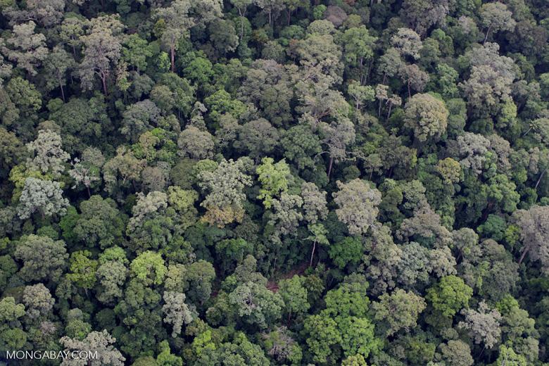 Untouched rainforest in Sabah