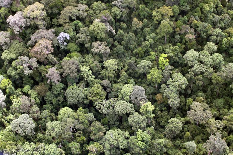 Pristine rainforest in Malaysian Borneo