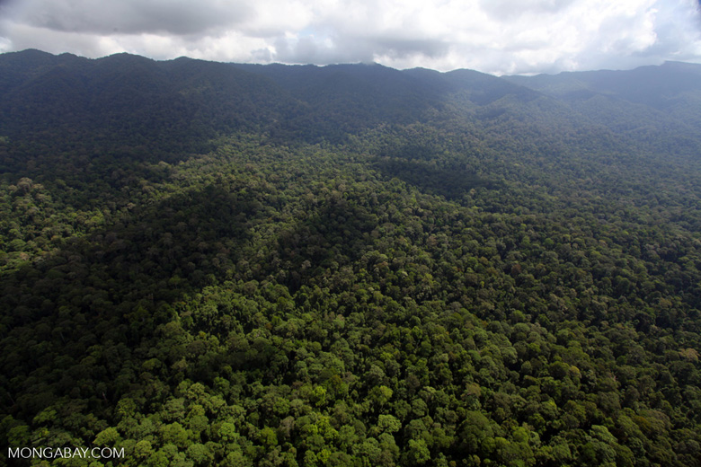 Ancient rainforest in Sabah, Malaysia