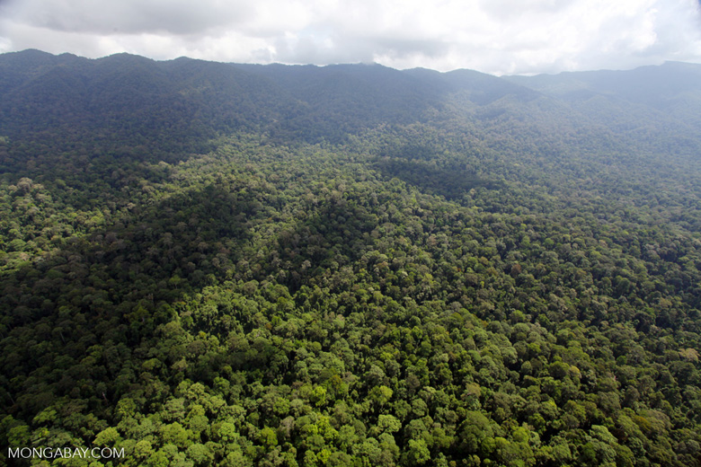 ancient rain forest in sabah  malaysia