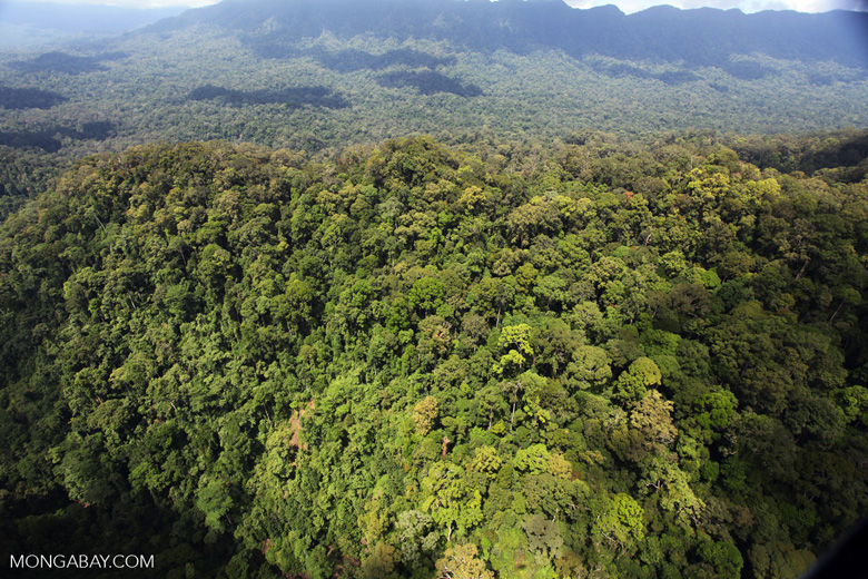Primary rainforest in Malaysia