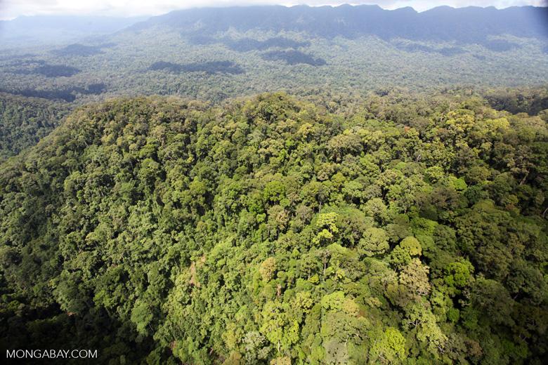 Primary rainforest in Malaysian Borneo