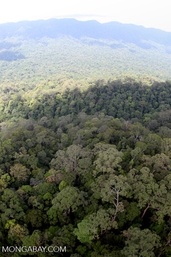Primary rainforest in Sabah, Malaysia