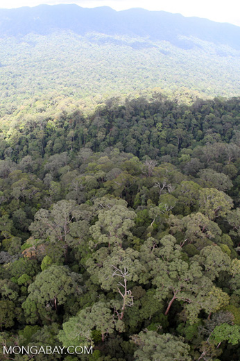 Primary rain forest in Sabah, Malaysia