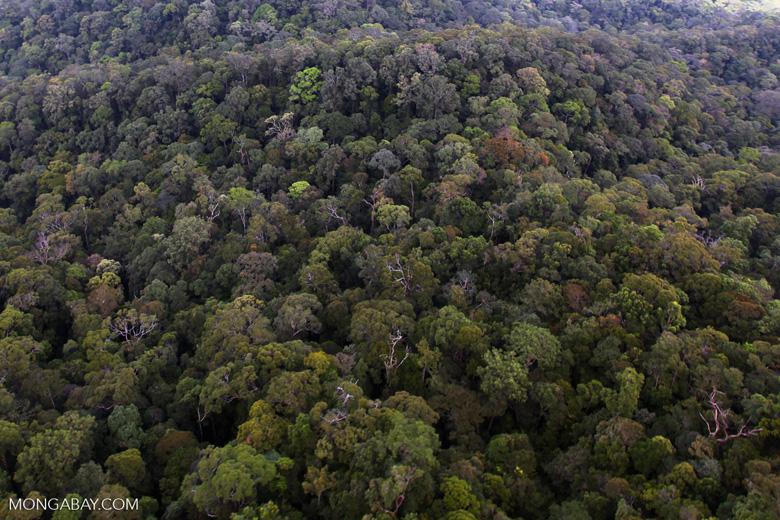 Virgin rain forest in Imbak Canyon, Sabah, Malaysia