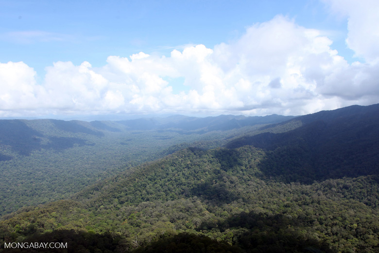 Untouched rainforest in Imbak Canyon, Borneo