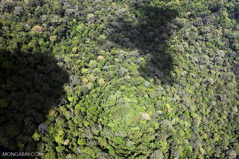 Pristine rainforest in Imbak Canyon, Borneo