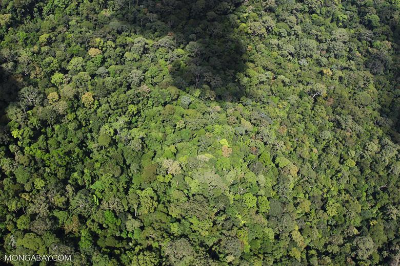 Pristine rain forest in Imbak Canyon, Malaysia