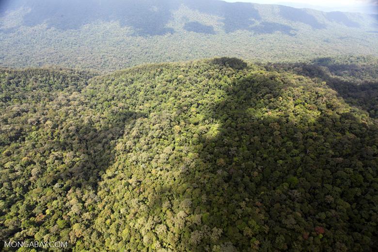 Oldgrowth rainforest in Imbak Canyon, Borneo