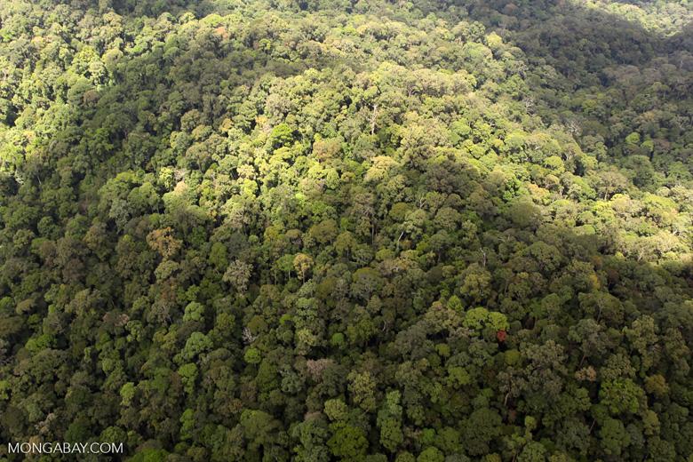Oldgrowth rainforest in Imbak Canyon, Sabah