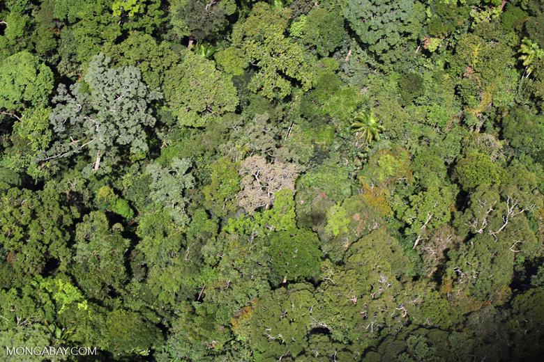 Primeval rainforest -- sabah_1449