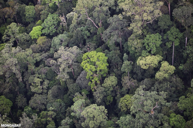 Primary rainforest in Imbak Canyon, Sabah, Malaysia