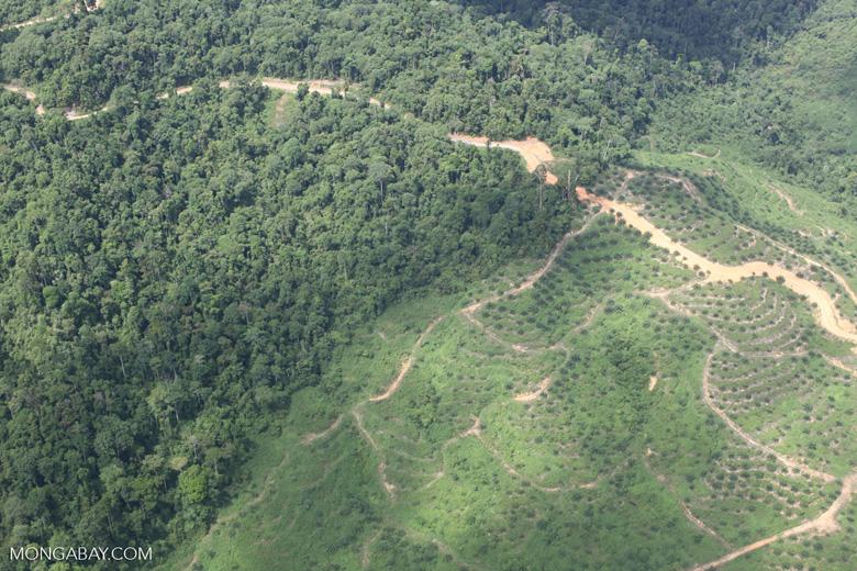 Logging road -- sabah_1486