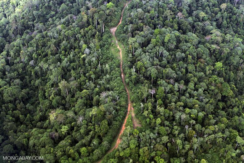 Logging road -- sabah_1510