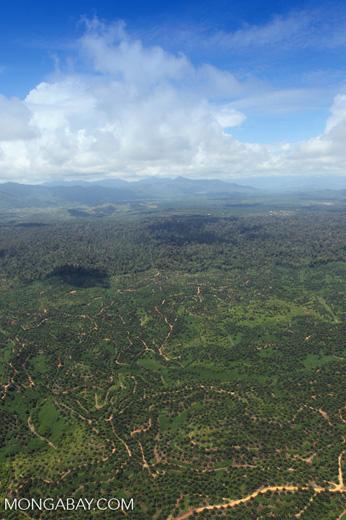 Oil palm plantation -- sabah_1605
