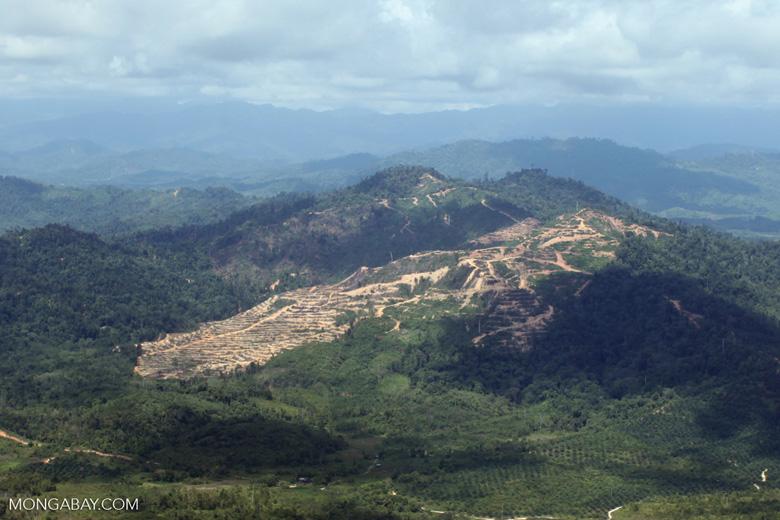 deforestation for oil palm -- sabah_1671