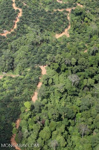 deforestation for oil palm -- sabah_1674
