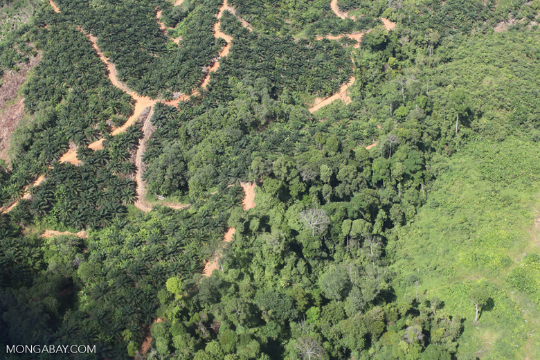 deforestation for oil palm -- sabah_1676