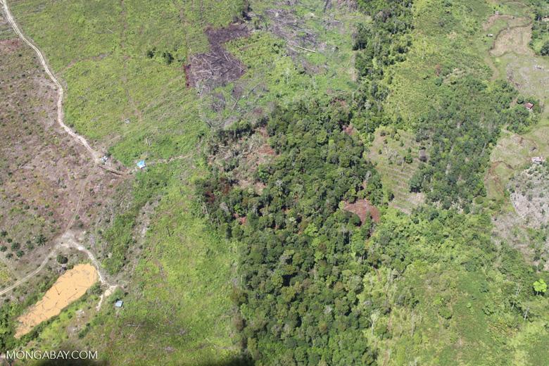 deforestation for oil palm -- sabah_1679