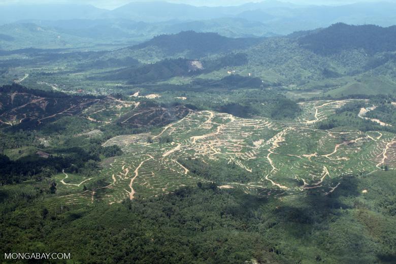 deforestation for oil palm -- sabah_1681