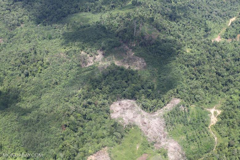 deforestation for oil palm -- sabah_1689