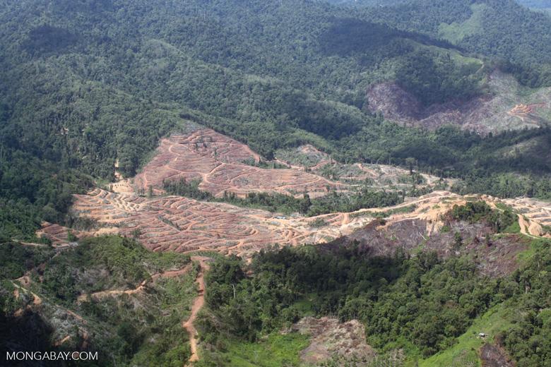Oil palm plantation -- sabah_1699