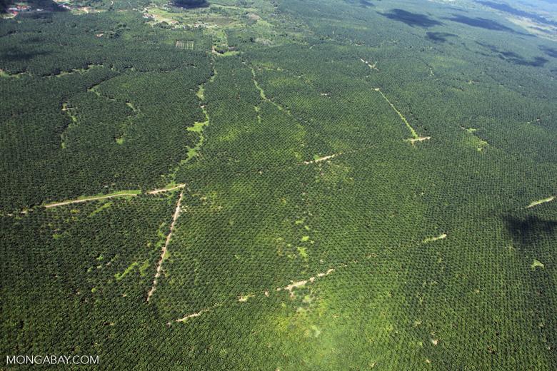 Oil palm plantation -- sabah_1720