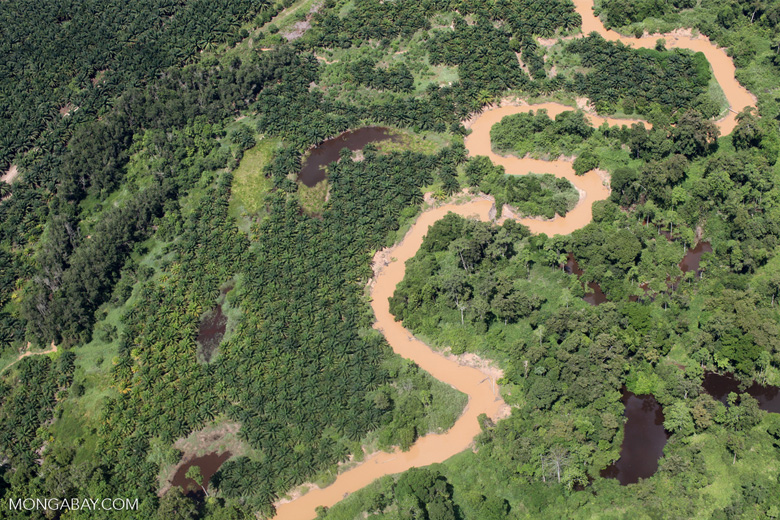 Oil palm plantation -- sabah_1742