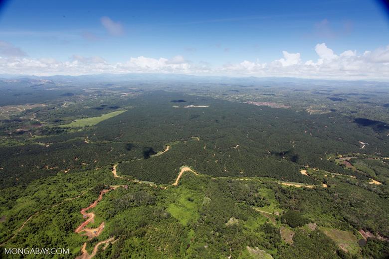 Oil palm plantation -- sabah_1779