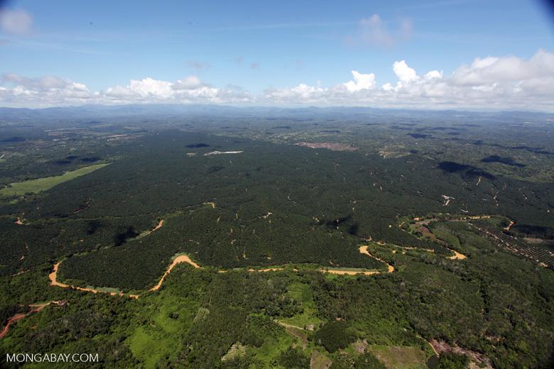 Oil palm plantation -- sabah_1780