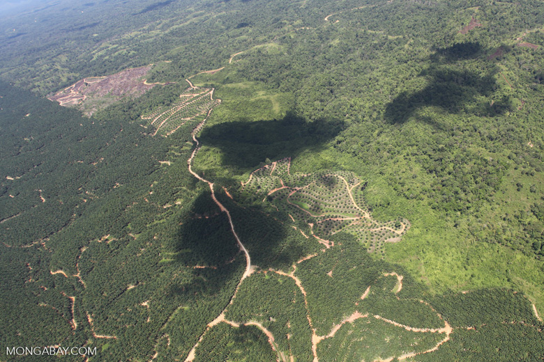Oil palm plantation -- sabah_1798