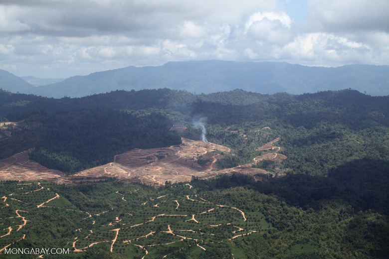 Fire burning on an oil palm plantation -- sabah_1818