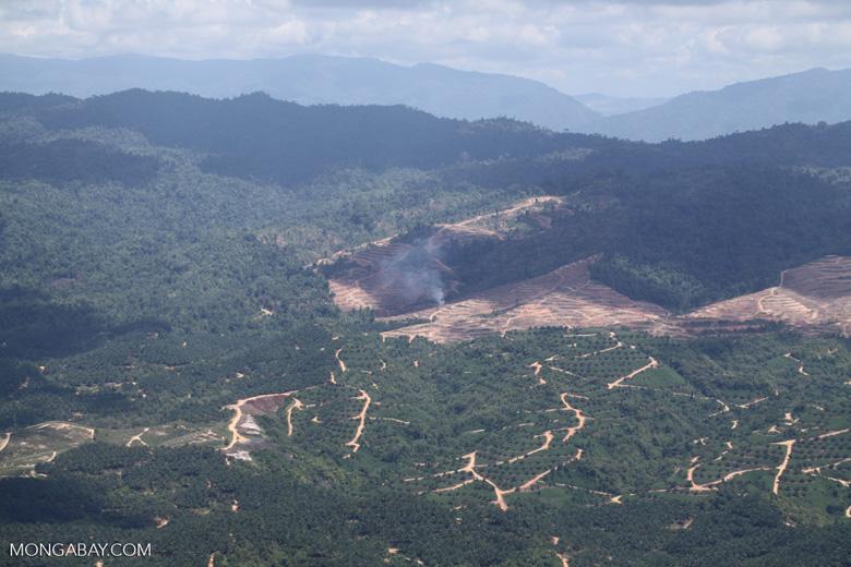 Fire burning on an oil palm plantation -- sabah_1819