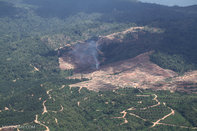 Fire burning on an oil palm plantation -- sabah_1825