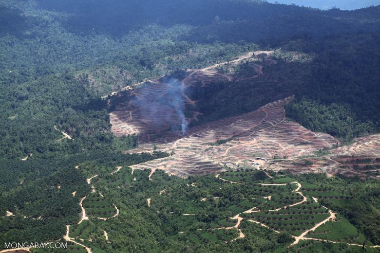 Fire burning on an oil palm plantation -- sabah_1826