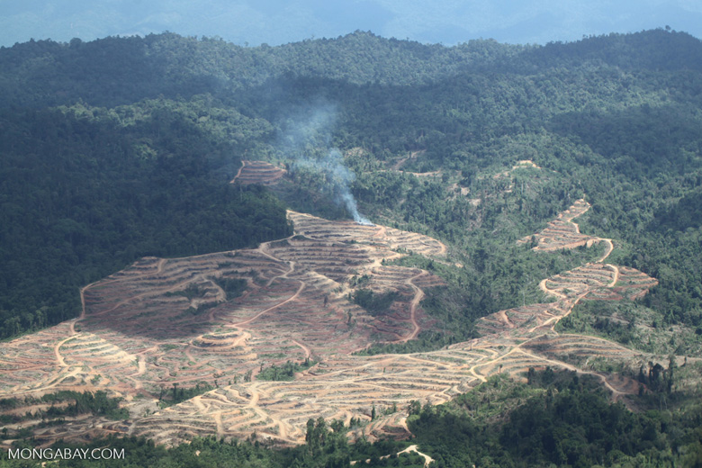 Fire burning on an oil palm plantation -- sabah_1827