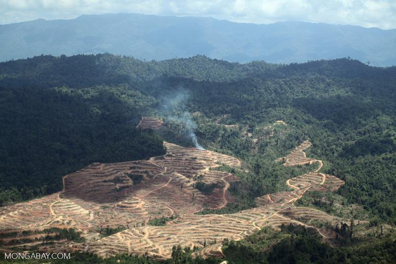 Fire burning on an oil palm plantation -- sabah_1830