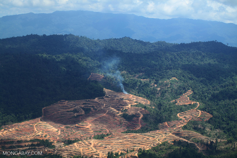 Forest cleared for oil palm in Sabah, Malaysia. Note smoke plum on the edge of the plantation. RSPO criteria ban open burning. Photo by Rhett A Butler
