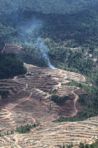 Fire burning on an oil palm plantation -- sabah_1837
