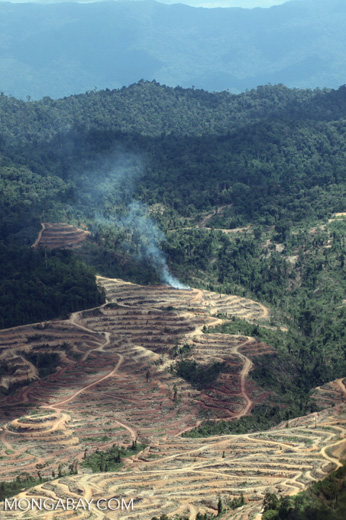 Fire burning on an oil palm plantation -- sabah_1838