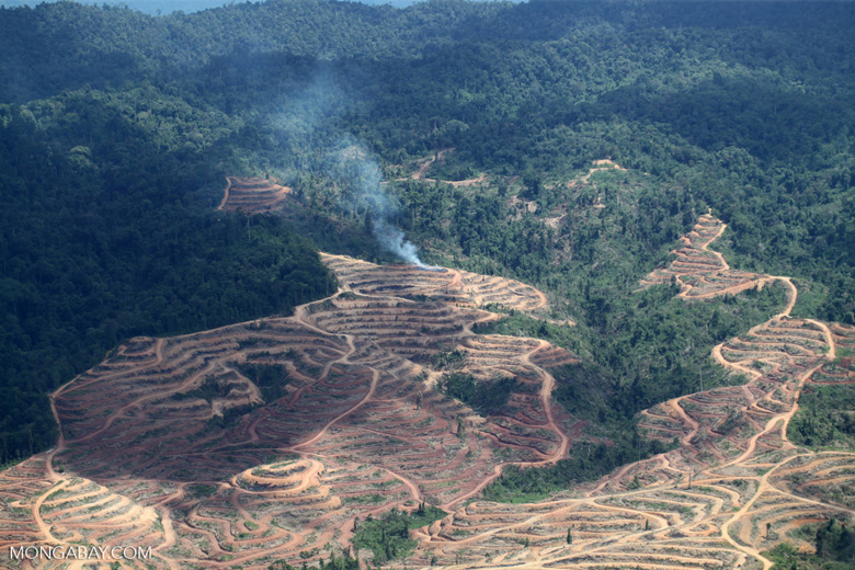 Fire burning on an oil palm plantation -- sabah_1842