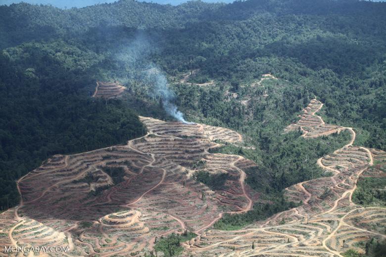 Fire burning on an oil palm plantation -- sabah_1843