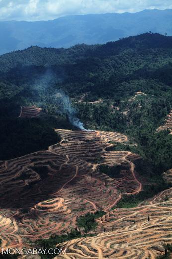 Fire burning on an oil palm plantation -- sabah_1844