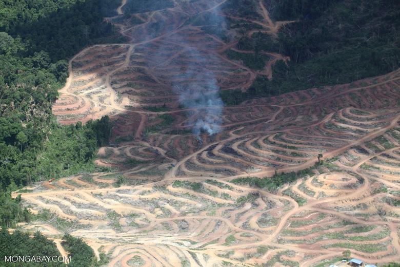 Fire burning on an oil palm plantation -- sabah_1849
