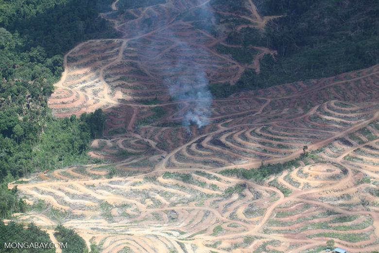 Fire burning on an oil palm plantation -- sabah_1851