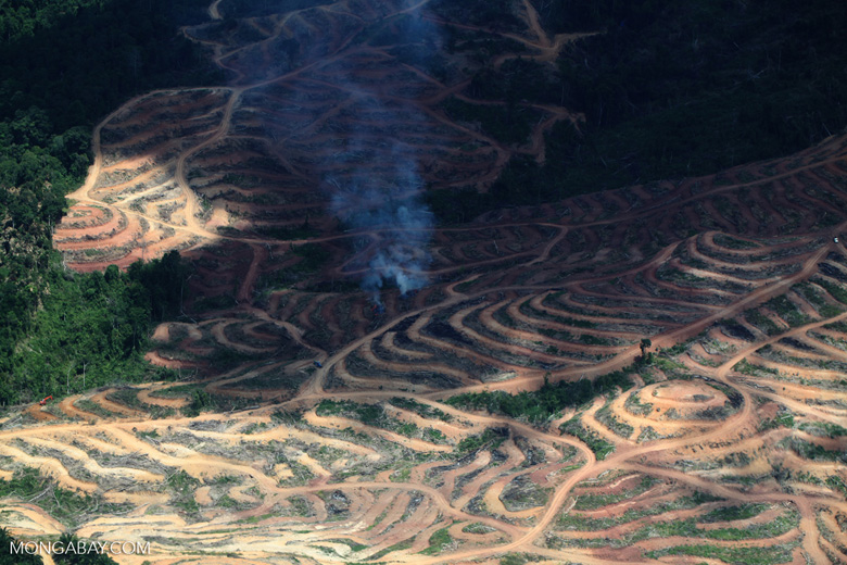 Fire burning on an oil palm plantation -- sabah_1853
