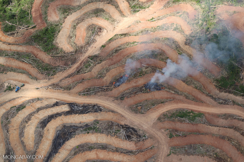Fire burning on an oil palm plantation -- sabah_1858